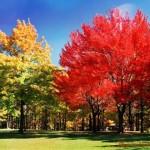 Рассказ на тему осень