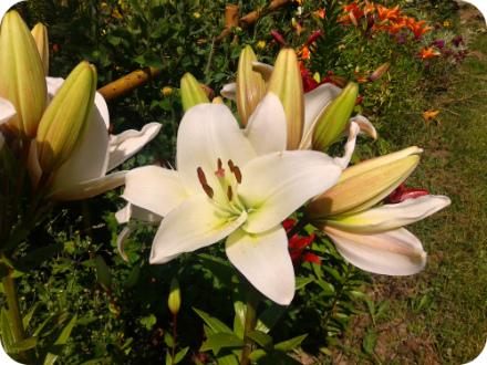 Фотографии цветков